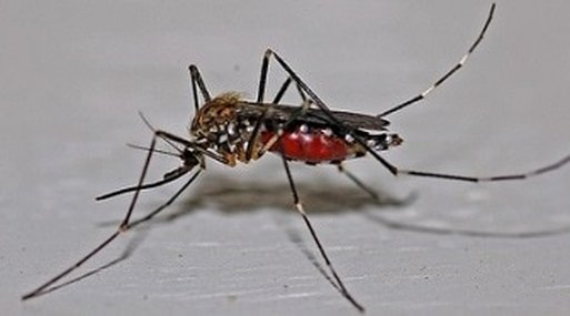 mosquito control services in Accokeek